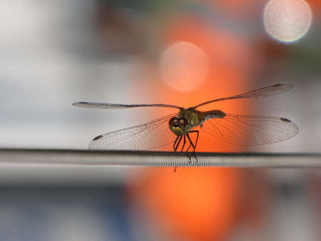steel cable: Dragonfly on a steel cable