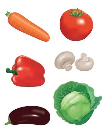 champignon: fresh vegetables: carrot,tomato,pepper,champignon,eggplant and cabbage. Illustration