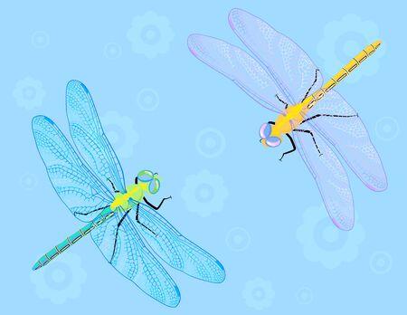 Twee kleurrijke libellen op de blauwe bloem achtergrond.