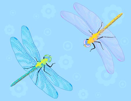 dragonflies: Two colourful dragonflies on blue flower background.