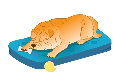Funny Chinese Shar-Pei sleeping with its favourite bone. Vector