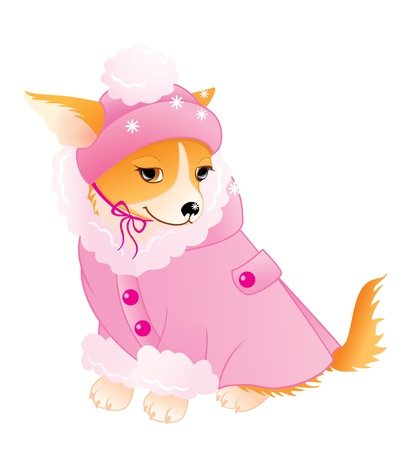 Glamour Chihuahua in warm pink coat and cap. Vector