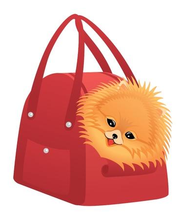 Happy Pomeranian spitz sitting in red bag. Vector