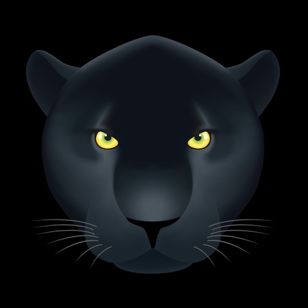 black panthers: Panther head on black background. Vector illustration contained gradient meshes.