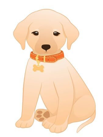 puppy cartoon: Vector illustration of a little labrador retriever puppy wearing an orange collar with a dog tag. Illustration