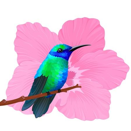 Paradise kolibrie en roze hibiscus. Vector illustratie.