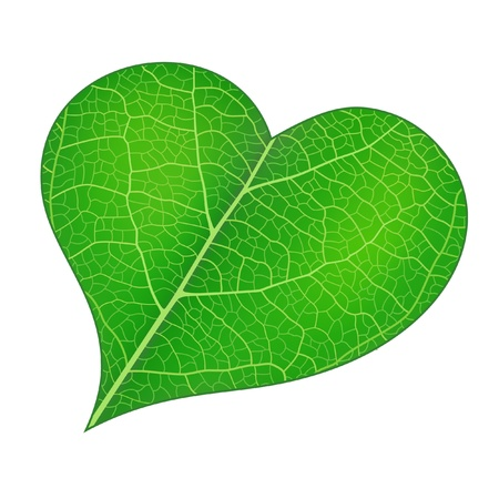 Green heart with detailed leaf texture. Vector illustration contains mesh.