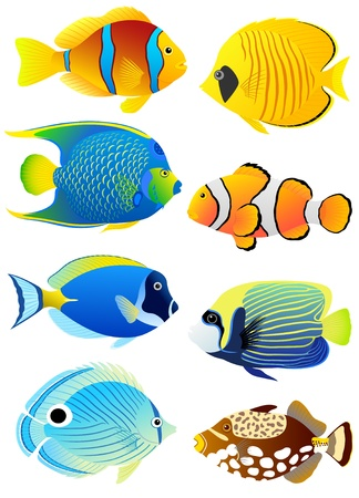 triggerfish: Collection of colorful tropical fish.