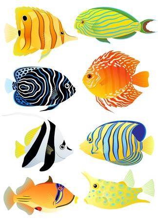 Collectie van kleurrijke tropische vissen