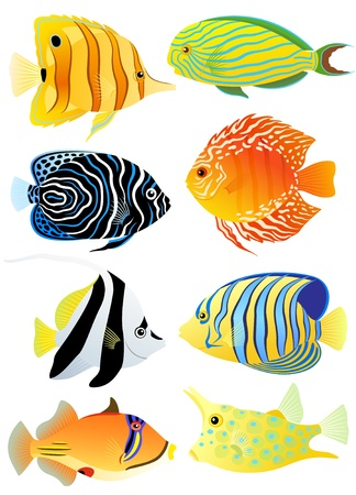 Collection of colorful tropical fish  Vector