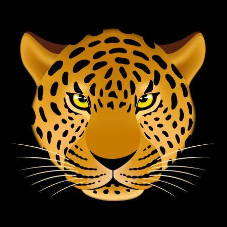 leopard head: Leopard head on black background