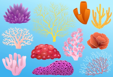 Collection of colorful corals isolated on blue background. Vector