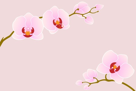 Two branches of pink orchid for your design. Stock Vector - 10905371