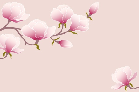 the magnolia: Magnolia branch for your design.