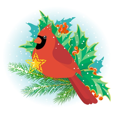 Illustration of cardinal bird with Christmas star on pine branch against the background of holly leaves and berries.