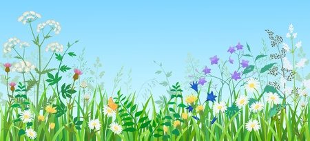 Ilustración de verano prado de flores silvestres y hierbas.