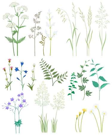 Collection of herbs and wild flowers on white background. Illustration