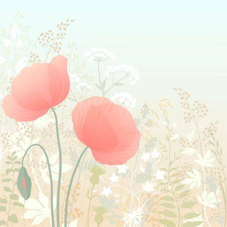 poppy field: Amapolas silvestres en el fondo a base de hierbas. Vectores