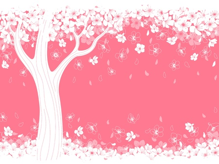 sakura flowers: Spring background with blossom sakura. Illustration