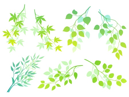 Collection of green branches for your design. Stock Vector - 12485671