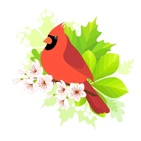 Cardinal bird sitting on blossom cherry branch  Spring concept for your design  Vector