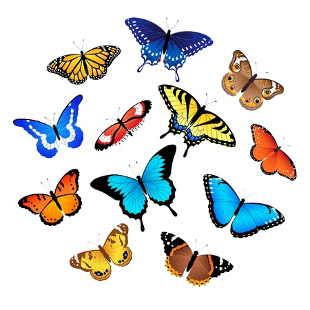 Set of colorful butterflies isolated on white background