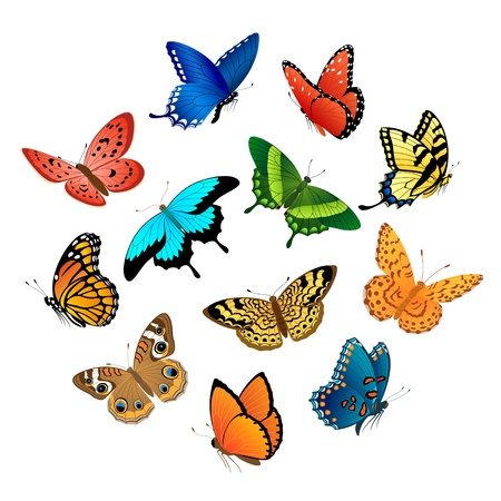 butterflies flying: Raccolta di coloratissime farfalle che volano isolato su sfondo bianco