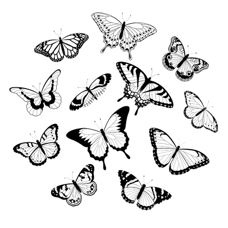 Collection of black and white butterflies isolated on white background