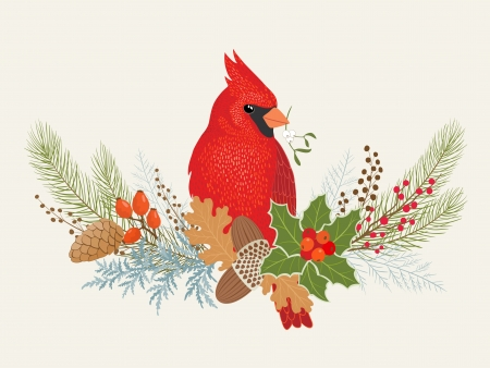 fir cone: Decoraci�n floral y el p�jaro cardenal para su dise�o Navidad. Vectores