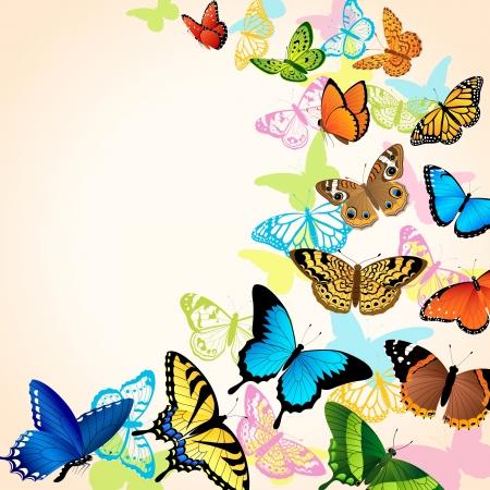 butterflies flying: Con sfondo luminoso butteflies coloful Vettoriali