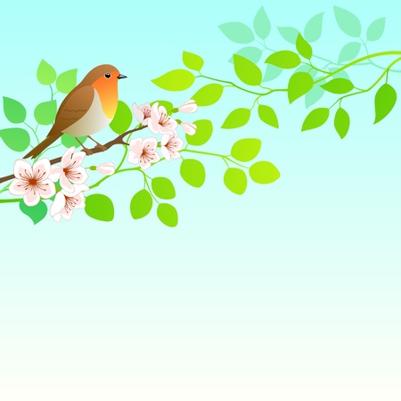 Spring background with Robin bird.