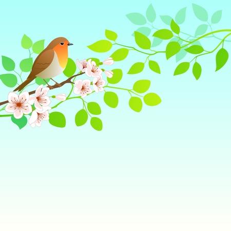 ramo di ciliegio: Primavera sfondo con Robin uccello. Vettoriali