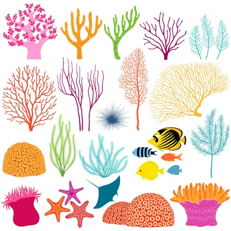 marine coral: Set of colorful underwater design elements