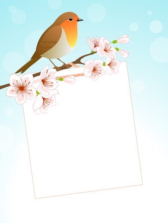 robin bird: Spring background with Robin bird, cherry branch and copy space. Vector contains transparent objects. EPS 10. Illustration