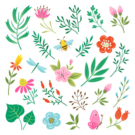 Set of insects and floral design elements isolated on white background Illustration