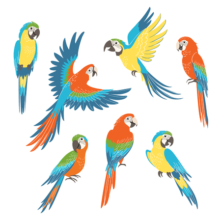 Set of colorful macaw parrots isolated on white background