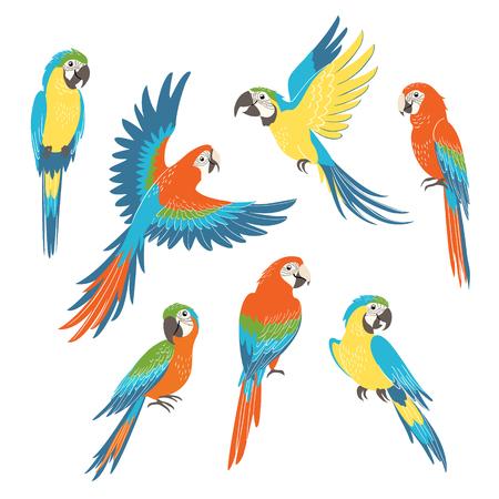 Zestaw kolorowych papug Ara na białym tle