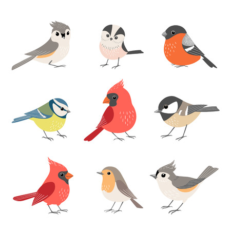 Set of cute winter birds isolated on white background Illustration