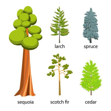 a cedar: Árbol de conjunto de iconos