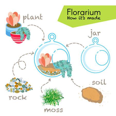 terrarium: Tutorial how to make florarium. Succulents inside glass terrarium, elements for florarium: jar, plant, rocks, moss, soil. Vector illustration