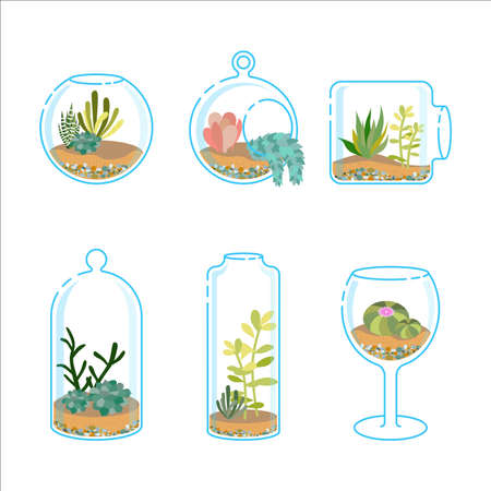 terrarium: Set of flat florariums with different succulents and cactus for design modern interior. Plant in a glass aquarium. Vector illustration isolated on wight background Illustration