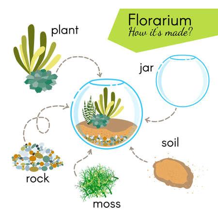 Tutorial how to make florarium. Succulents inside glass terrarium, elements for florarium: jar, plant, rocks, moss, soil. Vector illustration