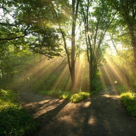 rayos de sol: Los rayos del sol brillan a través de las ramas de los árboles