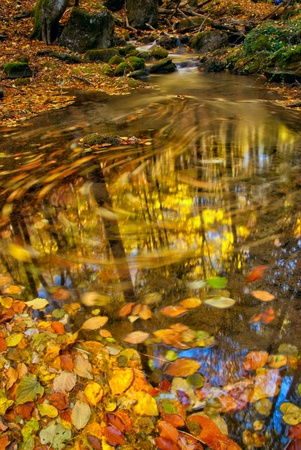 Autumn stream with moving leaves and wood reflection in water photo