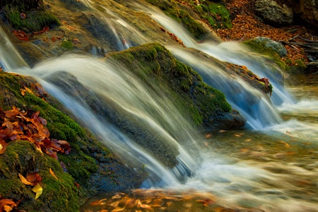 A small waterfall is surrounded by moss and fallen autumn maple leaves