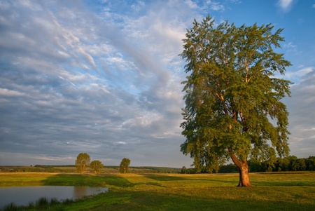 Beautiful meadow landscape with lonely tree and lake Stock Photo - 12434951