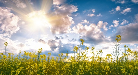 Summer field with flower and sunlight in blue sky Stock Photo - 12434970