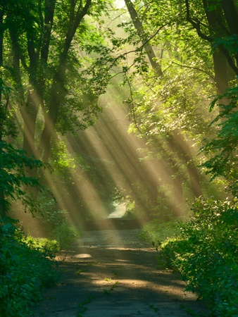 Rays of sunlight between trees in park Stock Photo