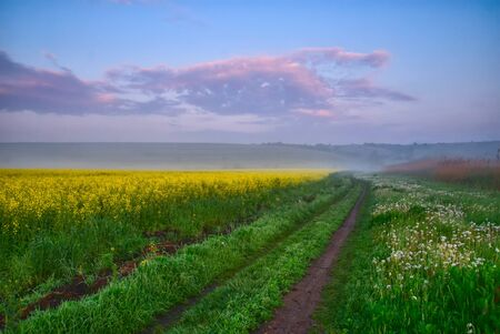 Road along a field of yellow flowers Stock Photo - 12434924