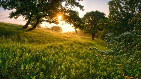 Morgen in den Wald, durch einen Baum scheint die Sonne Standard-Bild - 12604945